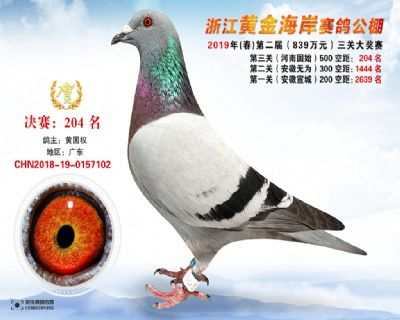 �S金海岸�Q�204名