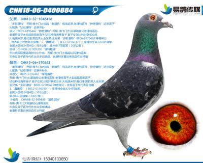 佛卡门-超级潘特884