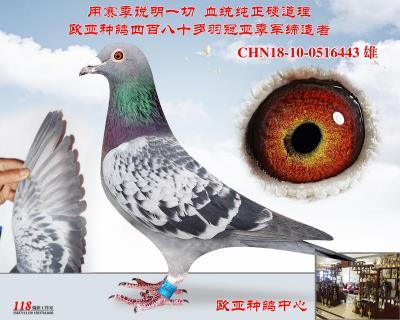 杨阿腾超级回血号X詹森427X520近亲金母