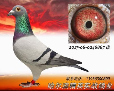 2016年春北京公棚�Q��冠�平�