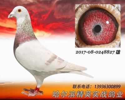 2016年秋哈���I���_俱�凡堪挡骞谲�平�