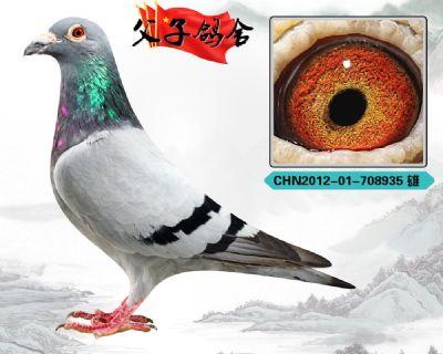 瑞茂公棚鸽王父亲 胡本年轻艺术家 原环作出