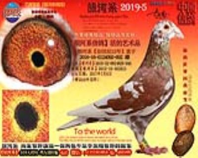 银河系《中国虎2012-16-084752号直孙》