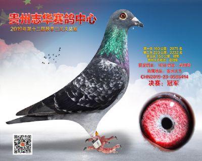 贵州志华决赛冠军