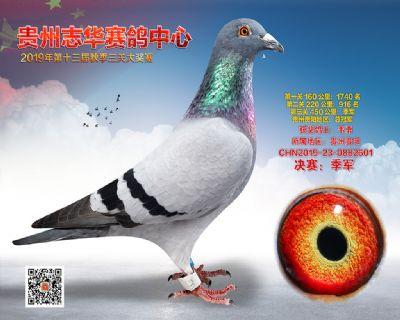贵州志华决赛季军