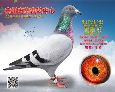 贵州志华决赛8名