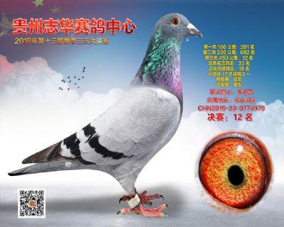 贵州志华决赛12名