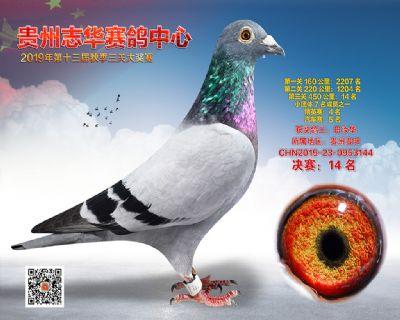 贵州志华决赛14名