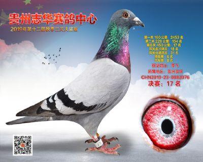 贵州志华决赛17名