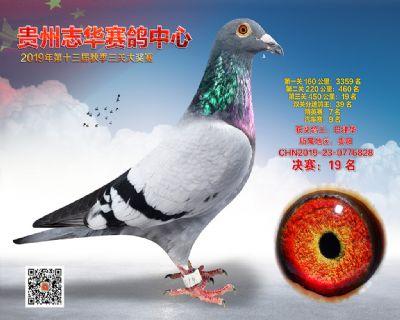 贵州志华决赛19名