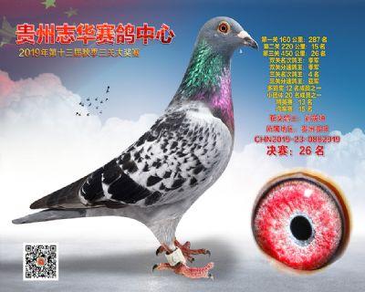 贵州志华决赛26名