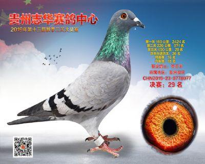 贵州志华决赛29名