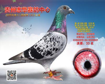 贵州志华决赛33名