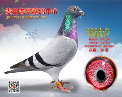 贵州志华决赛36名
