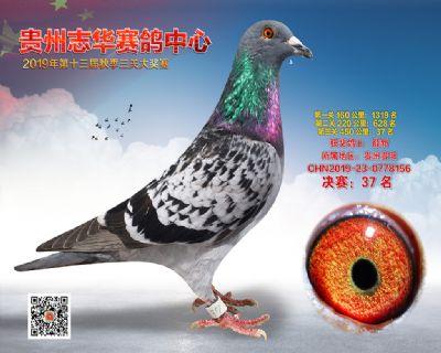 贵州志华决赛37名