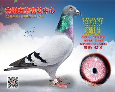 贵州志华决赛42名