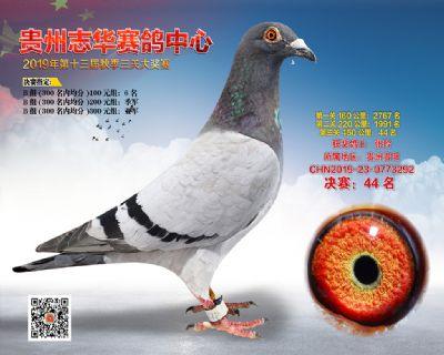 贵州志华决赛44名