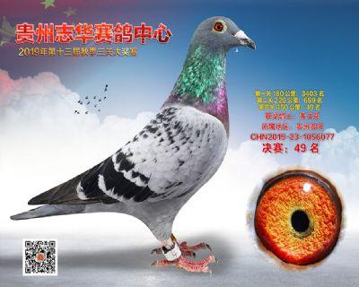 贵州志华决赛49名