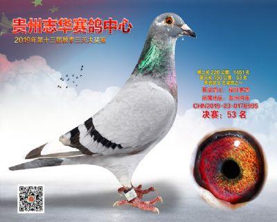 贵州志华决赛53名