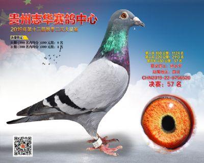 贵州志华决赛57名