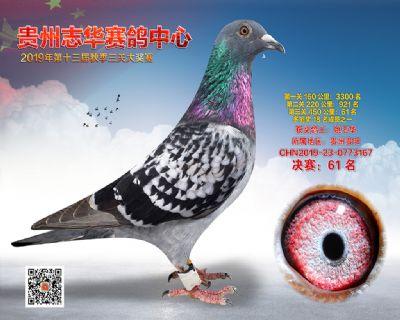 贵州志华决赛61名