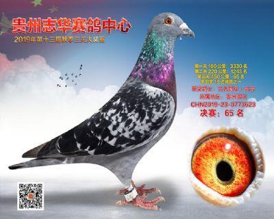 贵州志华决赛65名