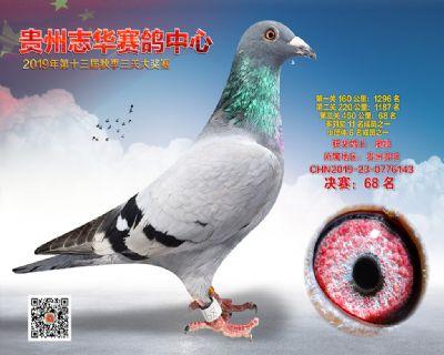 贵州志华决赛68名