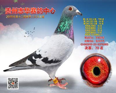 贵州志华决赛70名