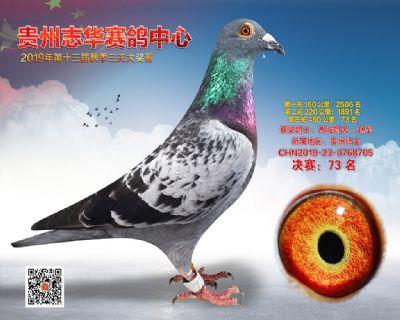 贵州志华决赛73名