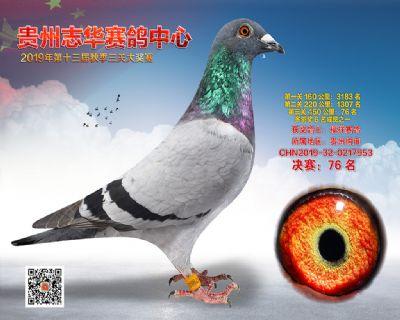 贵州志华决赛76名