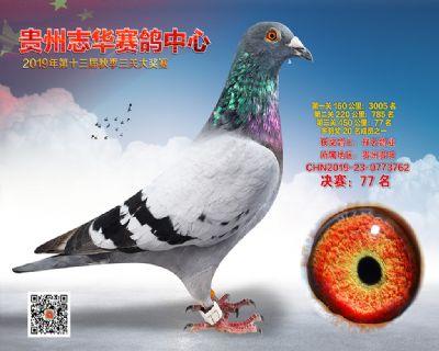 贵州志华决赛77名
