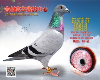 贵州志华决赛82名
