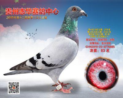 贵州志华决赛83名