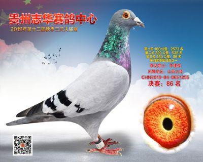贵州志华决赛86名