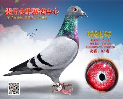 贵州志华决赛87名