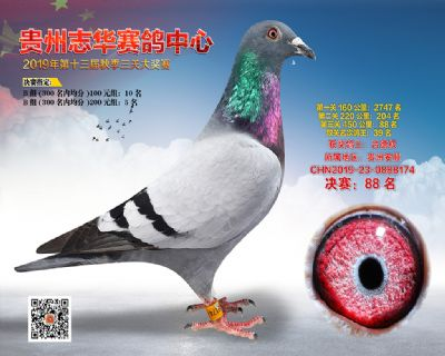贵州志华决赛88名