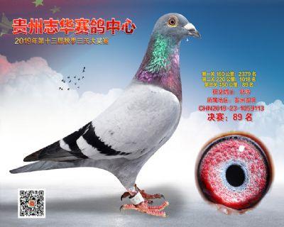 贵州志华决赛89名