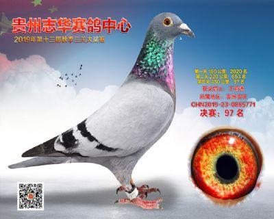 贵州志华决赛97名