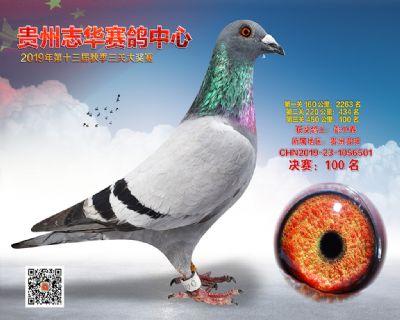 贵州志华决赛100名