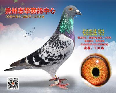 贵州志华决赛110名
