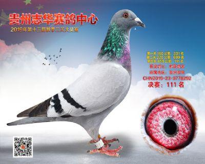 贵州志华决赛111名