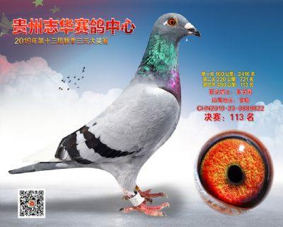 贵州志华决赛113名