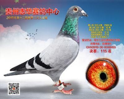 贵州志华决赛115名