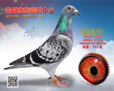 贵州志华决赛117名