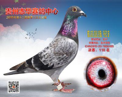 贵州志华决赛118名