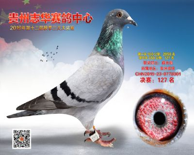贵州志华决赛127名