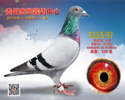 贵州志华决赛129名