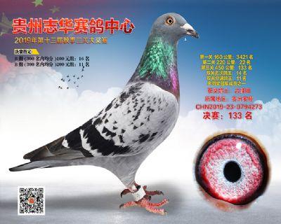 贵州志华决赛133名
