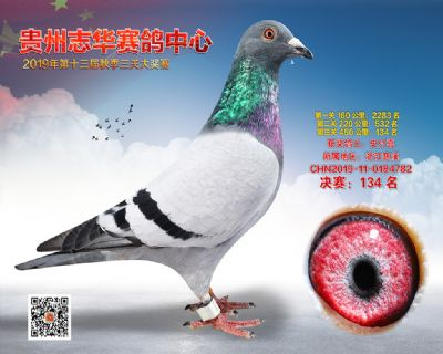贵州志华决赛134名