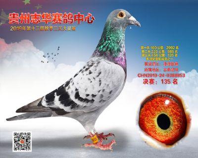 贵州志华决赛135名